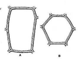 Structure de la matière liège